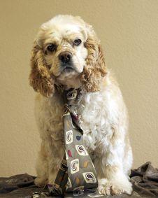 Dog Wearing Neck Tie Royalty Free Stock Image