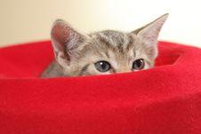 Free Small Kitten Royalty Free Stock Image - 15089726