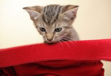 Free Small Kitten Stock Images - 15089734