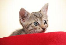 Free Small Kitten Stock Image - 15089741