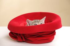 Free Small Kitten Stock Images - 15089744