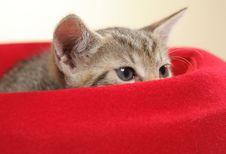 Free Small Kitten Royalty Free Stock Photo - 15089745