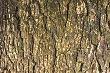 Free Tree Texture Stock Image - 15089751