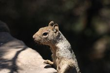 Free Squirrel Stock Image - 15089761