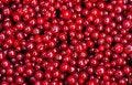 Free Redcurrants Texture Stock Photo - 15099340