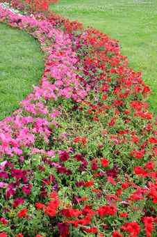 Free S Shaped Flower Bed In Meadow Stock Photo - 15090810