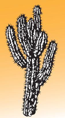 Free Cactus Royalty Free Stock Photos - 15091338
