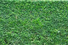 Free Green Wall Background Royalty Free Stock Photography - 15091567