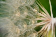 Free Seeds Blowing In The Wind Stock Photos - 15092083