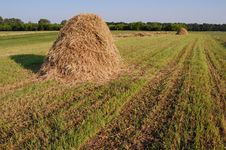 Free Hay Royalty Free Stock Images - 15094179