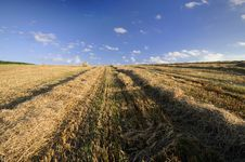Free Field After Harvest Stock Image - 15094781