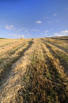 Free Field After Harvest Royalty Free Stock Photo - 15094815
