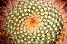Free Orange Cactus Royalty Free Stock Photography - 15095717