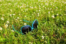 Free Blue Glasses Stock Photo - 15096230