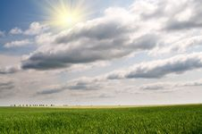 Free Green Wheat And Beautiful Blue Sky. Royalty Free Stock Photos - 15097518