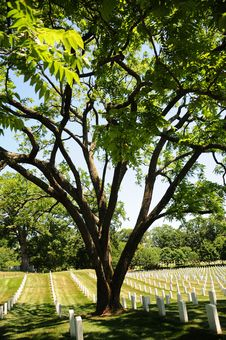 Free Tree And Tombstone Rows At Arlington Cemetery Royalty Free Stock Photography - 15098037