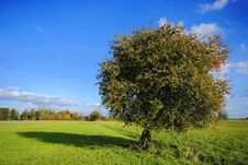 Pear Tree On Field Royalty Free Stock Images