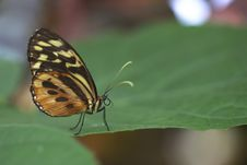 Free Exotic Butterfly On Leaf Royalty Free Stock Photos - 15098738