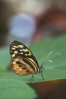 Free Exotic Butterfly On Leaf Stock Image - 15098751