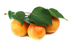 Free Apricot Royalty Free Stock Photo - 15099315