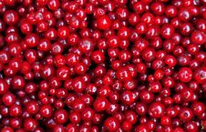 Free Redcurrants Texture Stock Photo - 15099340