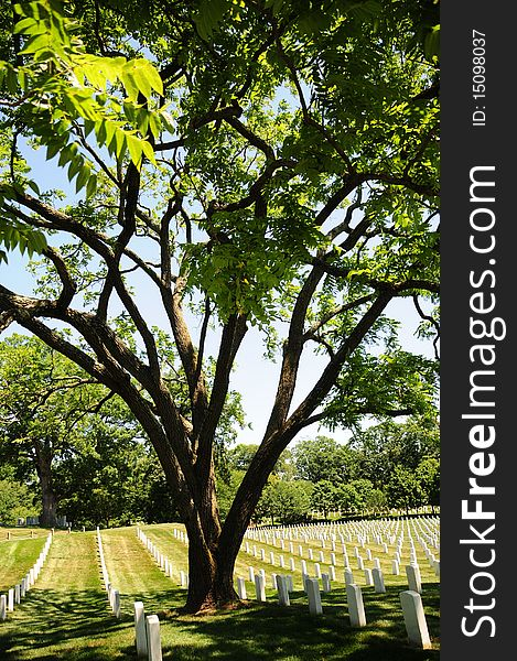 Tree and tombstone rows at Arlington Cemetery