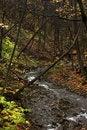 Free Bridge And Stream In Autumn Stock Photography - 1513042