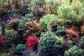 Free Autumn Woods Stock Photography - 1514622