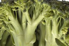 Free Broccoli Royalty Free Stock Photos - 1510968