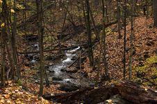 Free Stream In Fall Stock Image - 1513041