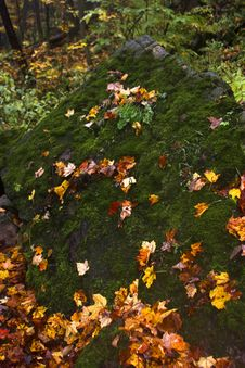 Free Mossy Rock In Autumn Royalty Free Stock Photo - 1513075
