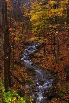 Free Stream In Autumn Stock Images - 1513084