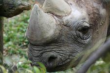 Free Rhino Stock Image - 1513311