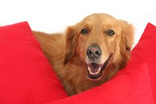 Free Dog Stock Photos - 1513423