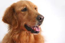 Free Dog Royalty Free Stock Photo - 1513425