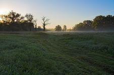 Dawn In The Meadow Stock Photos