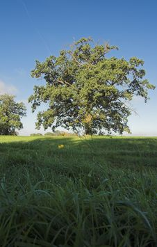 Free Meadow After Sunrise Stock Photography - 1517532