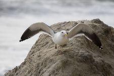 Free Bird On Rock 2 Royalty Free Stock Photos - 1519278