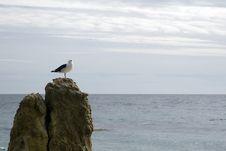 Free Bird On Rock 3 Stock Image - 1519311