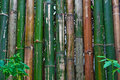 Free Bamboo Fence Royalty Free Stock Images - 15107089