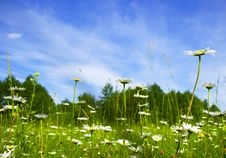 Blossoming Field Stock Photos
