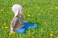 Free Beautiful Little Boy Looks In Green  Meadow Royalty Free Stock Photos - 15100708