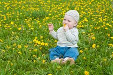 Free Beautiful Little Boy Looks In Green  Meadow Royalty Free Stock Photography - 15100807