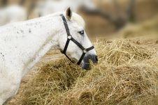 Free Horse Stock Photos - 15100833