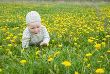 Free Beautiful Little Boy Looks In Green  Meadow Stock Images - 15100834