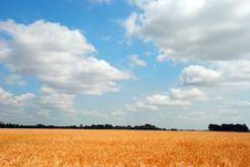 Free Wheat Field Royalty Free Stock Photography - 15100867