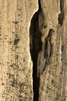Worn Driftwood With Deep Crack Royalty Free Stock Photo