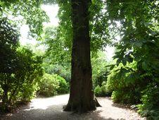 Free Treelined Path Stock Photography - 15101452