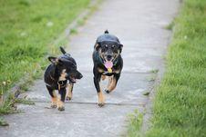 Free Doggies Stock Photography - 15102442