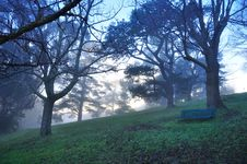 Early Misty Morning - Lonely Bench In A Park Royalty Free Stock Photos
